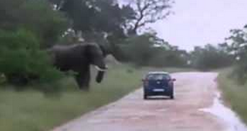 Elephant Turns On Car In Safari Park