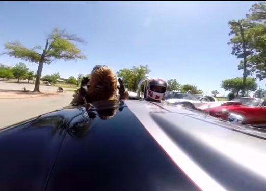 Chewbacca sighting at autocross in an AC Cobra